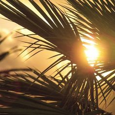 I just need you, palm trees and some sunsets ❥ ↠ Lotus Del Mar . . . #bestplacestogo #bestvacations #sidewalkerdaily #girlaroundworld #chasinglight #traveldeeper #huffpostgram #peoplescreatives #earthfocus #wonderful_places #makemoments #travelbug #globelletravels #mytinyatlas #igrecommend #lifeofadventure #roamtheplanet #exploretocreate #openmyworld #travelawesome #exploringtheglobe #travelandlife #Discover_Vacations #DiscoverGlobe #BestVacations #AwesomePix #Instatravel  #agoda…