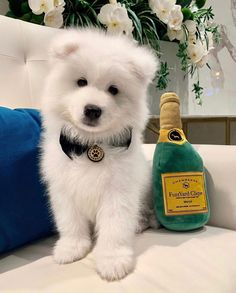 Originally bred to hunt, haul sledges, and herd reindeer, the Samoyed dog breed proved a valuable companion for northwestern Siberia's Samoyede people. Among the breed's duties: pack hiking… Rottweiler Funny, Rottweiler Puppies, Cute Puppies, Cute Dogs, Dogs And Puppies, Doggies, Baby Animals, Funny Animals, Cute Animals
