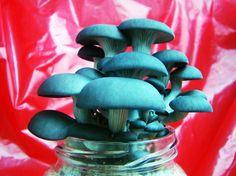 Cultive cogumelos com os kits Cogoo!