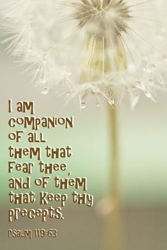 Psalm 119:63 KJV