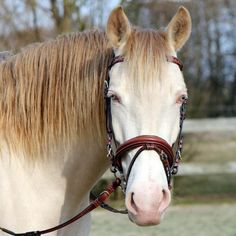 The Enchanted Cove: Photo Horse Bridle, Equestrian, Handsome, Horses, Animals, Trends, Animales, Animaux, Horseback Riding