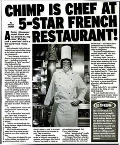 Weekly World News - chimp french chef Fake News Headlines, Funny Headlines, Wtf Funny, Crazy Funny, Weird News, Urban Legends, Dear Lord, Satire, All About Time