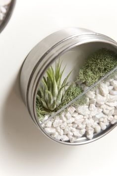 Wall mounted mini-terrariums: perfect to decorate the Bathroom with these.