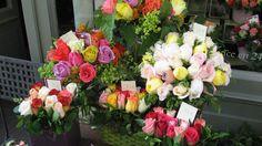 Roses Montmartre