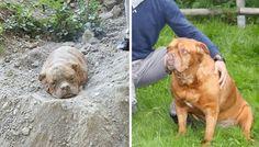 Una perra llamada Atenea fue noticia hace unos meses cuando se salvó de una muerte segura. La perra que había sido enterrada viva fue encontrada en París
