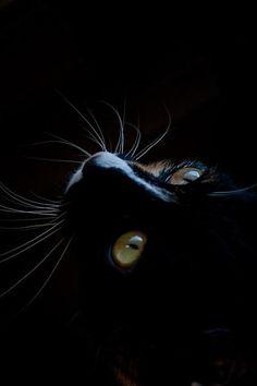 Black Cat in a Black Room