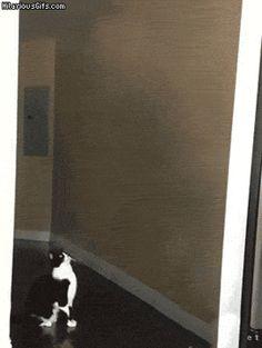 何目的?怪しいポーズで人を惑わす猫のゴールキティ : カラパイア