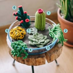 http://www.marthastewart.com/1502913/crochet-terrarium-including-different-succulents