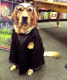 I go to hogwarts too!
