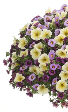 """The soft yellow of Supertunia Limoncello accents the purple tones in this container recipe perfectly. We named this """"Good Deed""""."""
