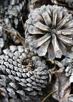 I grey l Photography Gallery, Nature Photography, Color Photography, Greige, Gray Aesthetic, Autumn Day, Autumn Theme, Color Themes, Pine Cones