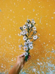 Imagem de flowers, yellow, and aesthetic #MellowYellow