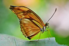 butterfly color beautiful