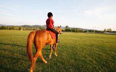 At Biniciliği Kastamonu - İksir Resort Town