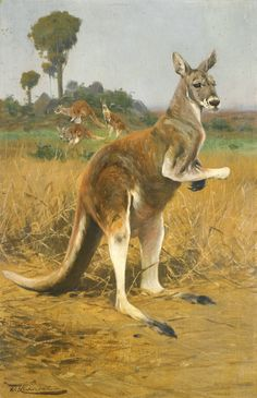 """Red Kangaroos in the Outback"". (by Wilhelm Kuhnert)."
