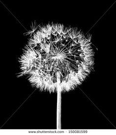Noir Et Blanc Photos et images de stock | Shutterstock