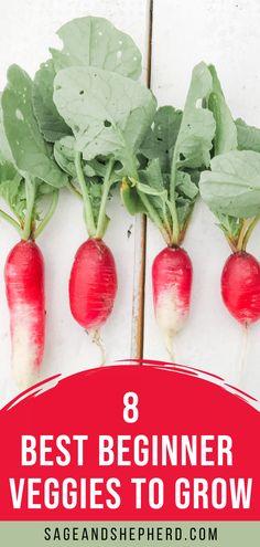 Starting a vegetable garden? Grow these 8 easies vegetables for beginners! Starting A Vegetable Garden, Vegetable Garden For Beginners, Gardening For Beginners, Gardening Tips, Easy Vegetables To Grow, Veggies, Raised Garden Beds, Garden Planning, Harvest