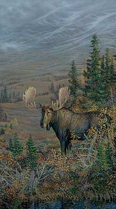 Big Country-Moose Painting by Sam Timm  |  Wild Wings