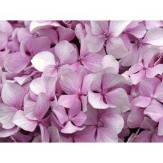 purple flowers ❤ liked on Polyvore featuring backgrounds, flowers, pictures, purple and photos