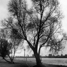 """""""Zeit ist der Beobachter, der den Abstand zwischen sich und den Bäumen, zwischen sich in dem was ist, herstellt (krishnam.)."""" #philo am #morgen ;-), via Flickr."""