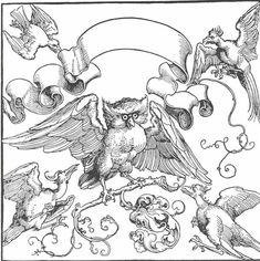The owl in fight with other birds - Alberto Durero