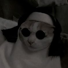 Yall need jesus Animals And Pets, Funny Animals, Cute Animals, Cute Cats, Funny Cats, Gatos Cool, Cat Aesthetic, Cat Wallpaper, Reaction Pictures