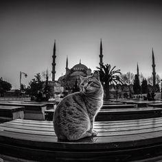 #lifeinistanbul #istanbul 2013 for my black&white photos please check @sefayamakbw