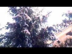Neve a Roma, ore12:16, 26 febbraio 2018 Emanuele Carioti Distampa Ematube