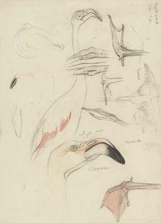 Studies van een flamingo, Theo van Hoytema, 1873 - 1917