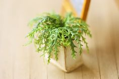 These green ferns are dollhouse miniature plants made with air dry clay! Forever green and fresh looking! Mini Plants, All Plants, Clay Flower Pots, Forever Green, Miniature Plants, Garden Trees, Air Dry Clay, Flowering Trees, Handmade Flowers