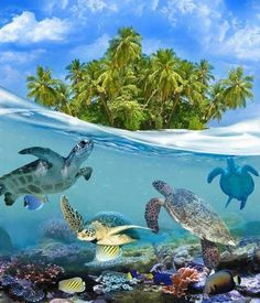 Sea Turtles in the Caribbean.