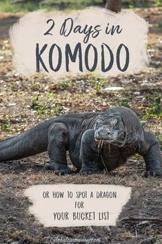 Find out how to prepare for a Labuan Bajo trip and explore the Komodo National Park - one of the most beautiful and unique places on earth! Cool Places To Visit, Places To Travel, Travel Destinations, Komodo National Park, National Parks, Komodo Island, Bali Travel, Travel Scrapbook, Travel With Kids