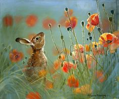 Hare and poppies by Willow Brooke.