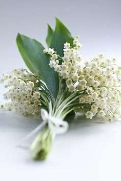 lindasinklings:  lily of the valley. via (lestroischouettes)