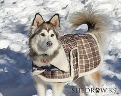 ORDER ONLINE, WORLD-WIDE SHIPPING. Raw Pet Food Market also offering Dog Clothes, Bowls, Collars & More! www.thefluffycarnivore.com #petstore #canada #orderonline #onlineshopping