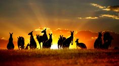 London Design, Inc. Wall Decals & Sticker uStrip Kangaroo Family Outback Wild Peel and Stick Removable Wall Decal Mural Australia Day, Coast Australia, Victoria Australia, Full Hd Wallpaper, Animal Wallpaper, Red Kangaroo, Cities, Phone Backgrounds Tumblr, Baby Bjorn