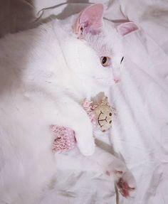Dobranoc róż z bielą na noc   #weeklyfluff #sobotakota #instacat #instagood #caturday #meow #funnycats #koty #mustlovecats #caturdaycuties #catscorner #ilovemycat #lovemycat #love