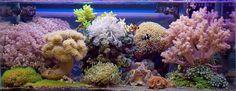 razarmi - 2012 Featured Nano Reefs - Featured Aquariums - Monthly Featured Nano Reef Aquarium Profiles - Nano-Reef.com Forums