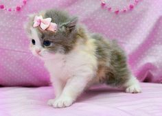 SWEET_CUTE_CATTY