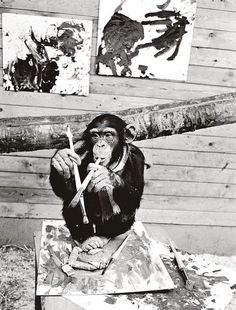 artistic chimp
