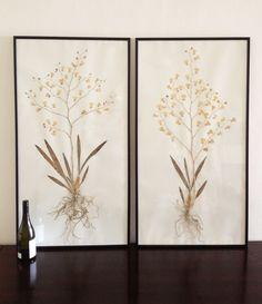 botanical study Orchids