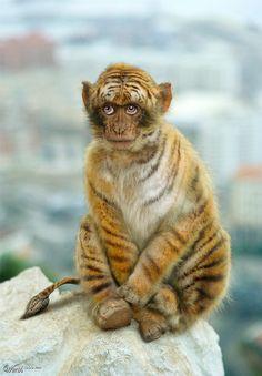 Monkey-Tiger-Elephant - Worth1000 Contests