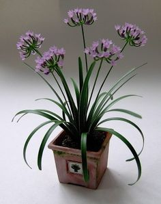 Agapanthus # miniatures, flower