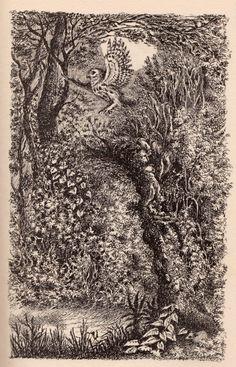 Illustration by Maurice Sendak for Randall Jarrell's 'The Bat-Poet' Maurice Sendak, Gustave Dore, Beautiful Owl, Owl Art, Typography Prints, Children's Book Illustration, Art Studios, Illustrators, Stitches