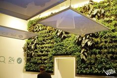green wall, national bank of greece