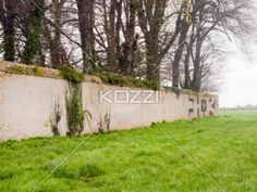 concrete wall and trees - A concrete wall with large trees peering over it in a grassy field