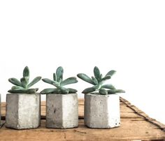 Set of 3 Concrete Hex Micro Planters, Succulent Planter, Concrete Pot, Geometric Planter, Wedding Favors, Hexagon, Angular, Modern, Honeycom von fraeandco auf Etsy https://www.etsy.com/de/listing/156089661/set-of-3-concrete-hex-micro-planters