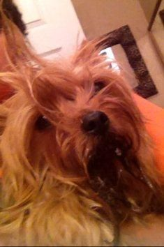 In Stamford and Jones County, Texas, regarding allegations that Stamford animal control officer Christopher Cerda fatally attacked his girlfriend's Yorkshire terrier