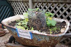 keyhole garden - Google Search