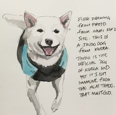 """Here's the final drawing of """"Jindo."""" #enddogmeattrade #dogart #rescuedogs #savekoreandogs #facesofhope"""